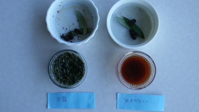 オリーブアナアキゾウムシはカフェインに弱いか実験