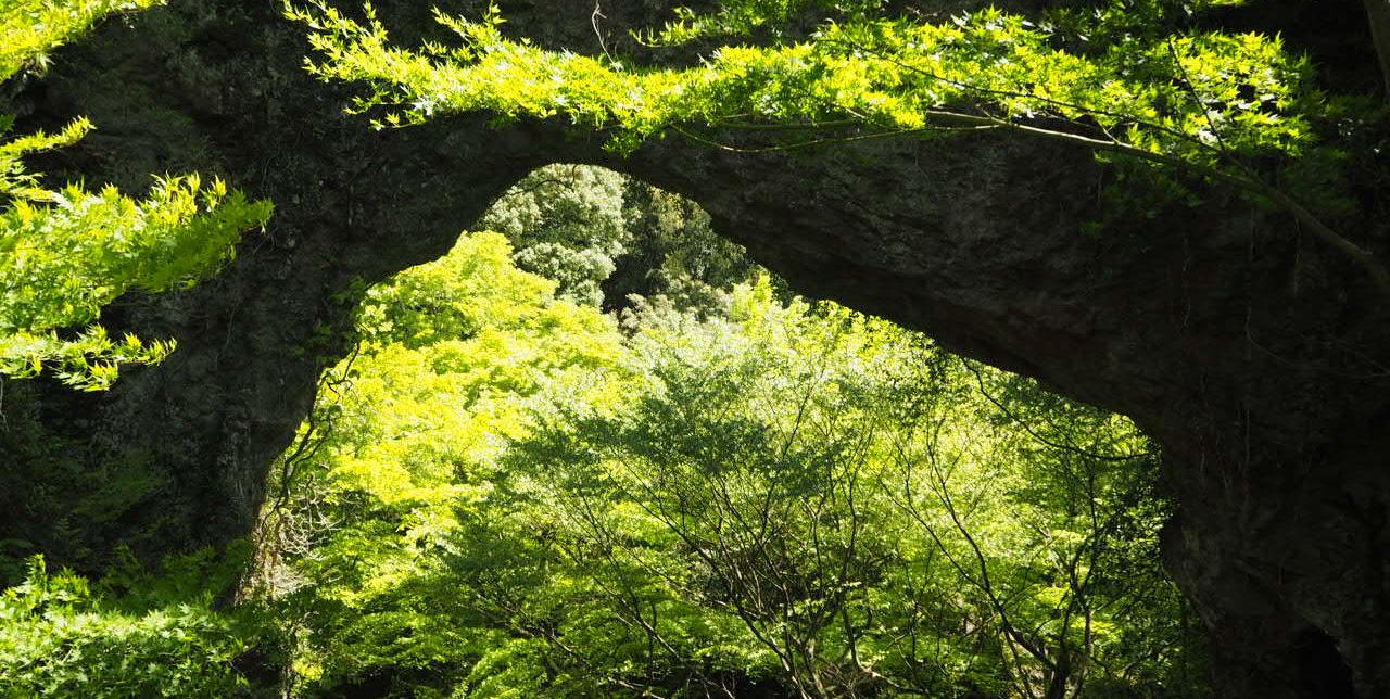 小豆島の森