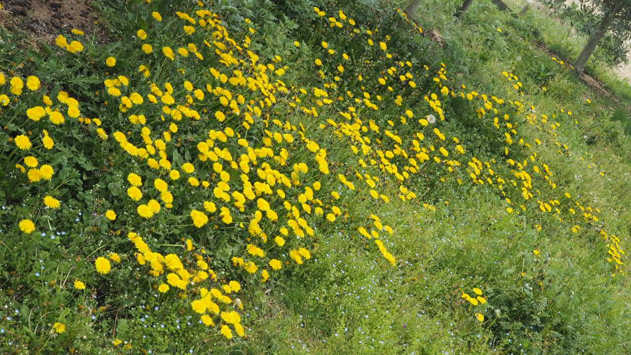 草花が覆う畑