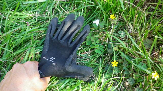 手袋を使ったハマキガの捕殺方法