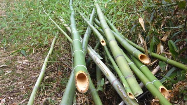 オリーブの竹の支柱