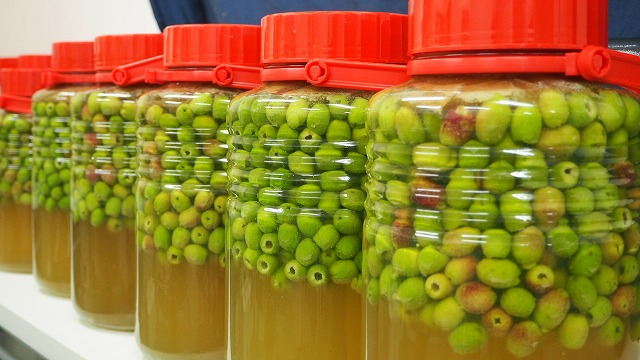 オリーブの塩水漬け/重曹水で渋抜き