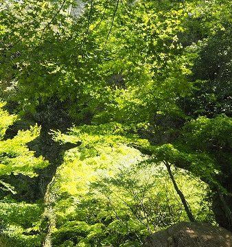 春の寒霞渓