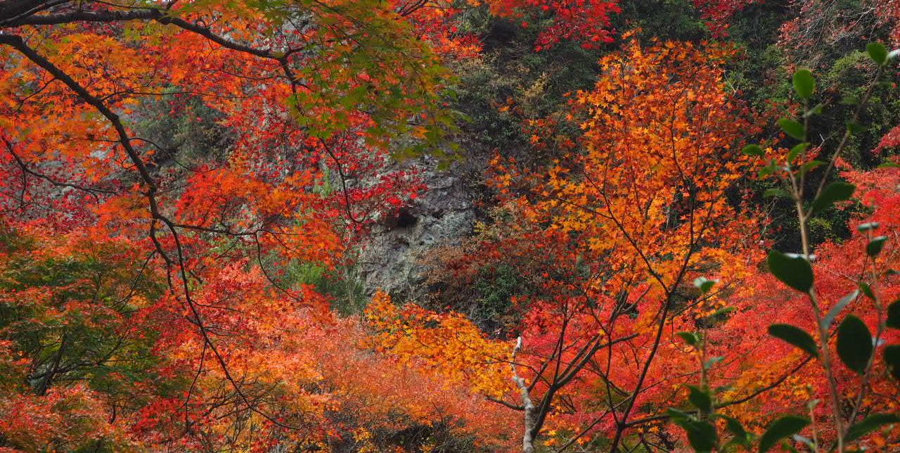 秋の寒霞渓