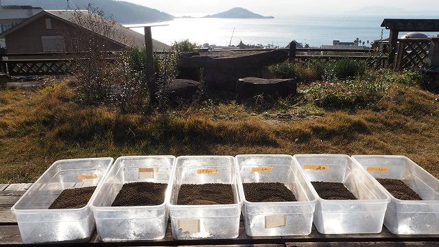 オリーブ畑の土・土壌診断