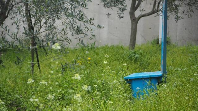 小豆島の有機オリーブ畑