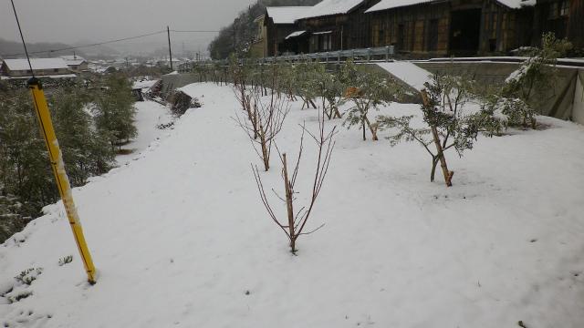 冬のアーモンド