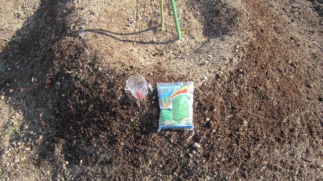 オリーブ畑にセンチピートグラスの種を撒く