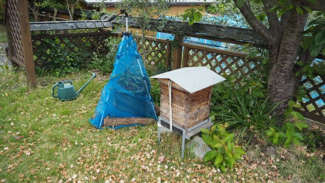 ミツバチの巣箱のキンリョウヘン