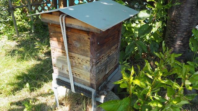 ニホンミツバチの巣箱