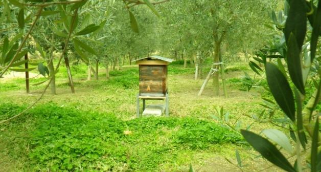 二ホンミツバチの巣箱