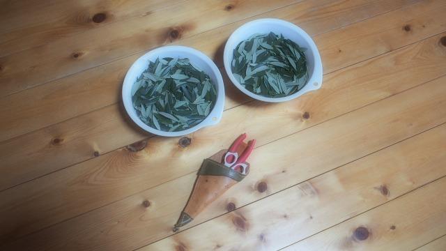オリーブ茶作り