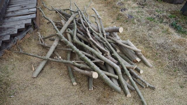 オリーブの薪作り