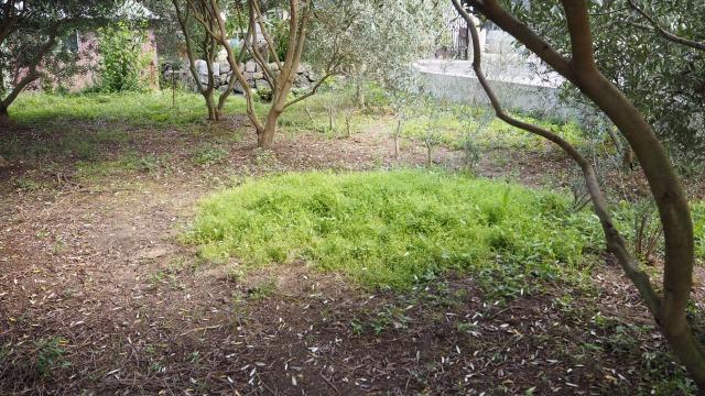 間伐後の下草