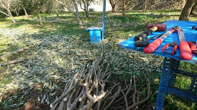 2010冬のオリーブ畑にて剪定
