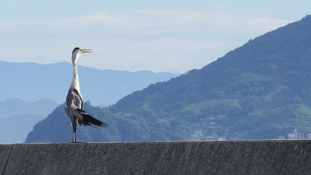 小豆島・草壁港