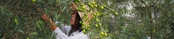 収穫アルバイト募集