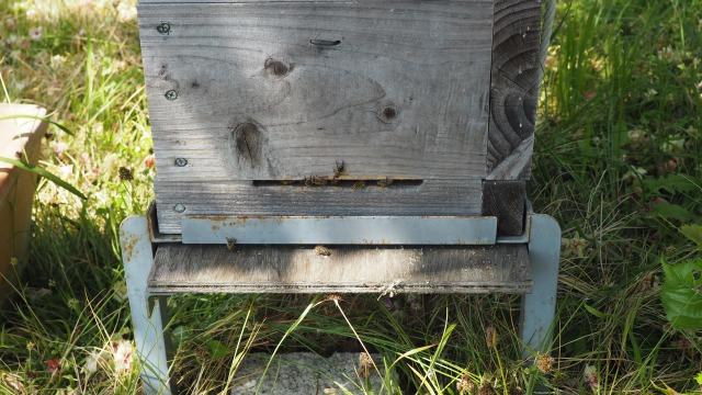 2021年春巣箱にミツバチがやってくる