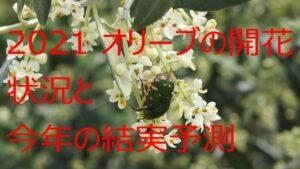 2021年のオリーブ開花と収穫量の予想というか祈り