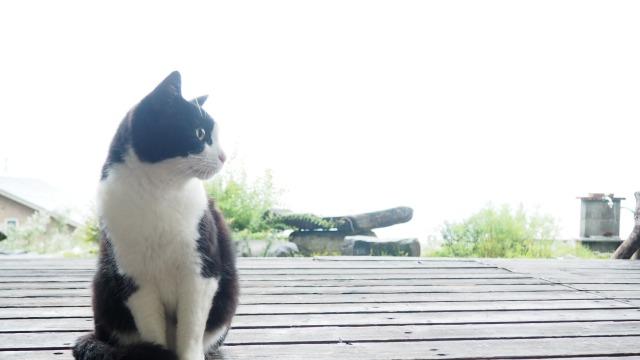 デッキに猫