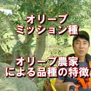 オリーブのミッション種