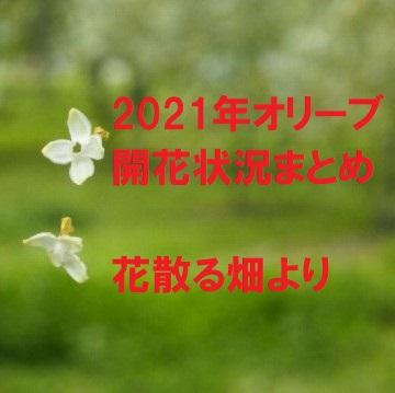 2021年オリーブの開花状況まとめ