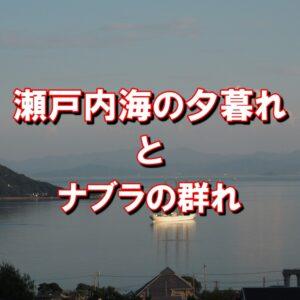 瀬戸内海の夕暮れとナブラの群れ/帆船と入道雲