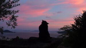 暮れなずむ瀬戸内海を眺める黒猫/小豆島に夏がやってきた