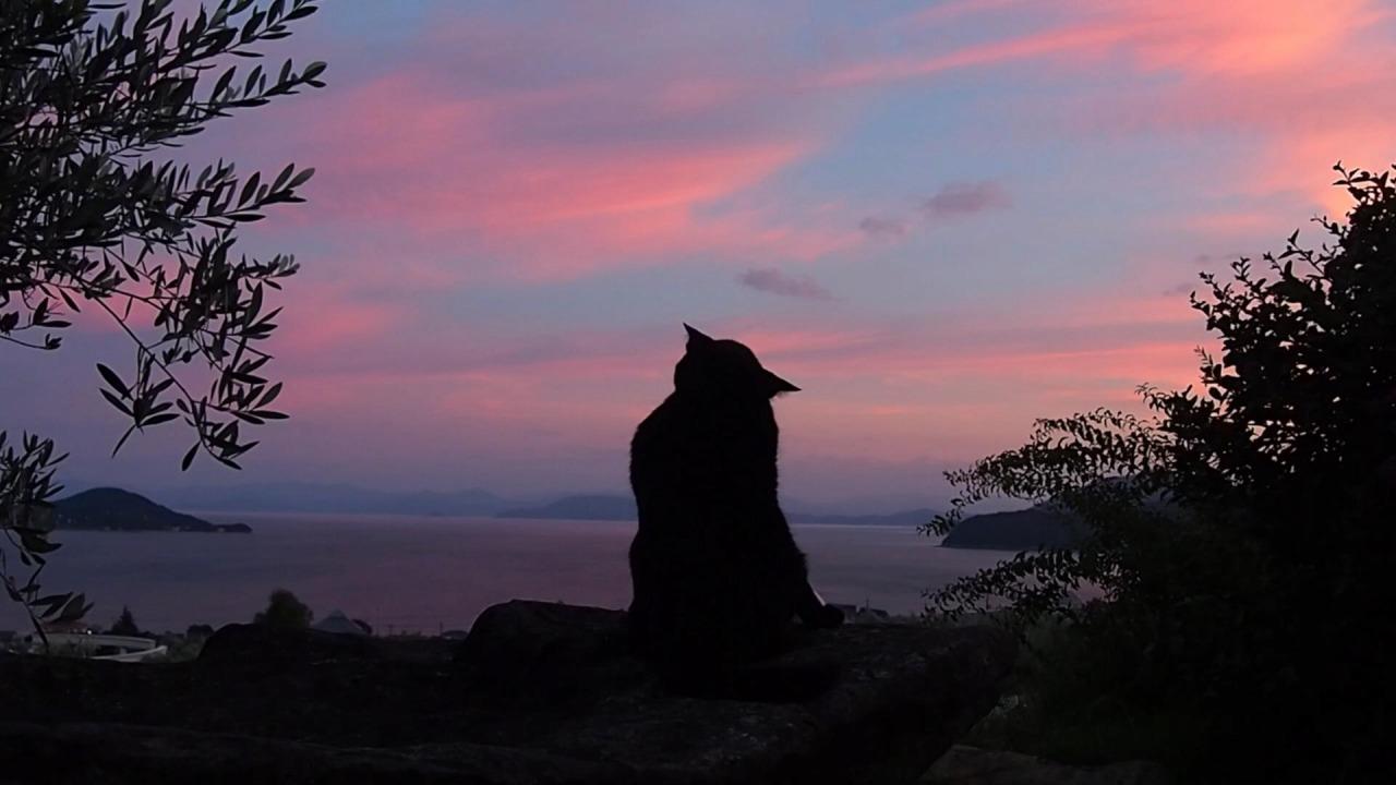 夕日とネコ