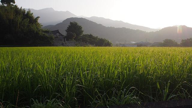 小豆島の田園