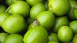 【2021年秋収穫】小豆島産有機オリーブ果実(マンザニロ種)を販売します。