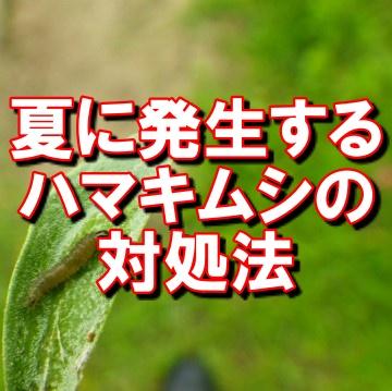 オリーブの害虫ハマキムシ